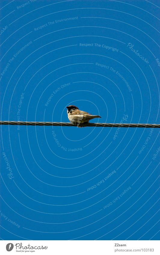 vogerlpause Natur Himmel blau Wolken Tier Zufriedenheit Vogel fliegen Seil Kabel einfach Leitung graphisch