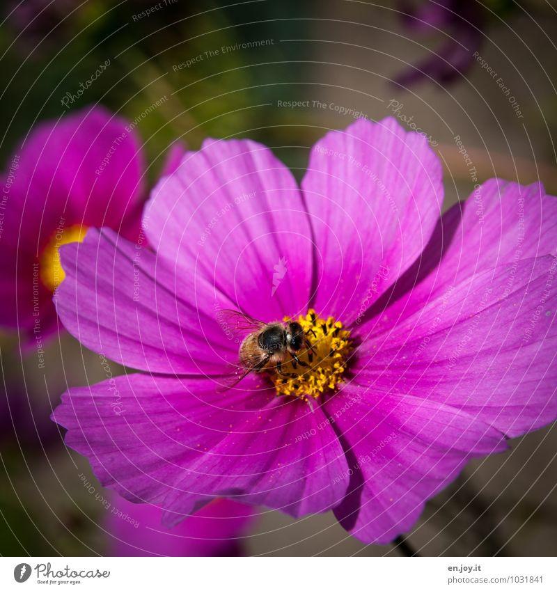 Schmuckkörbchen Natur Pflanze schön Sommer Blume Tier Blüte Frühling Feste & Feiern rosa Arbeit & Erwerbstätigkeit Wachstum Geburtstag Fröhlichkeit Klima
