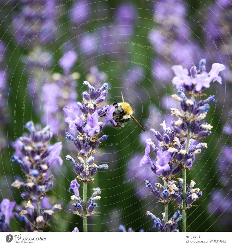 gar nich dumm Natur Pflanze Sommer Erholung Blume Tier Umwelt Blüte Frühling Garten Gesundheitswesen Wachstum Idylle Geburtstag Klima Lebensfreude