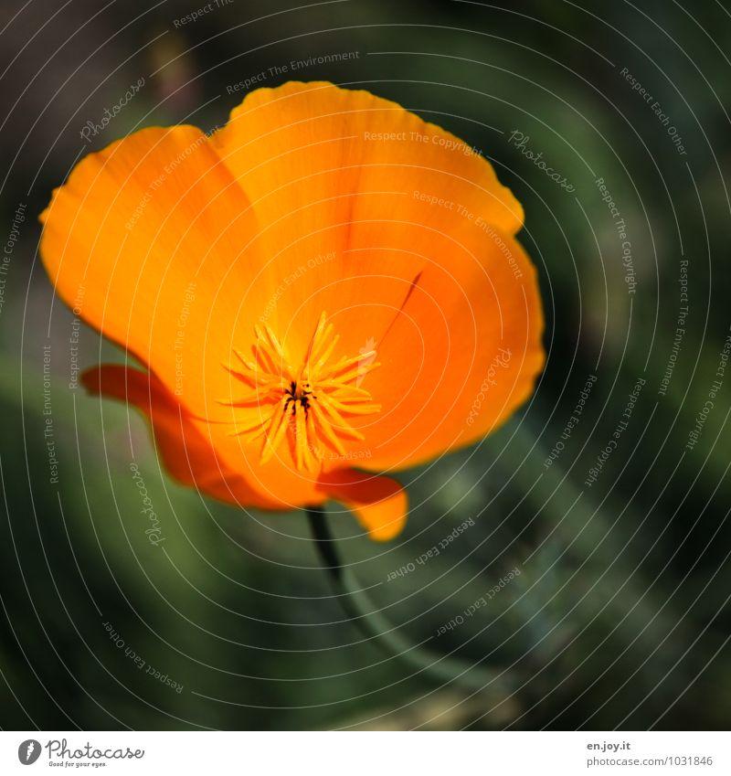 orange Natur Pflanze grün schön Sommer Blume Umwelt Blüte Frühling Wiese Garten Park Wachstum Geburtstag Fröhlichkeit