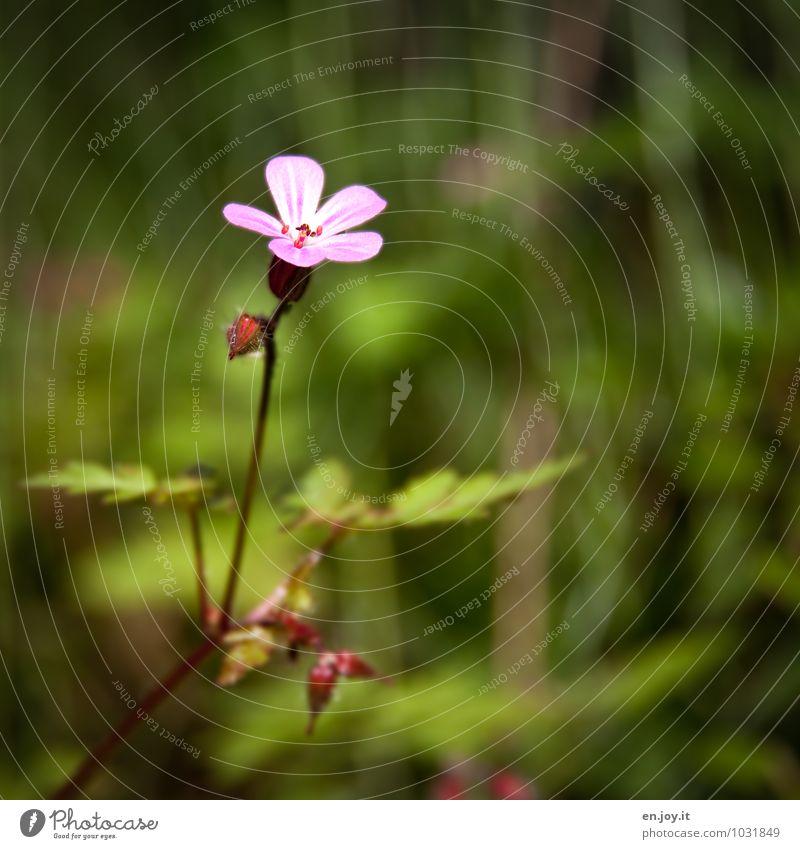 klein aber fein Natur Pflanze schön grün Sommer Blume Frühling Blüte Feste & Feiern Garten rosa Wachstum Geburtstag Lebensfreude Blühend