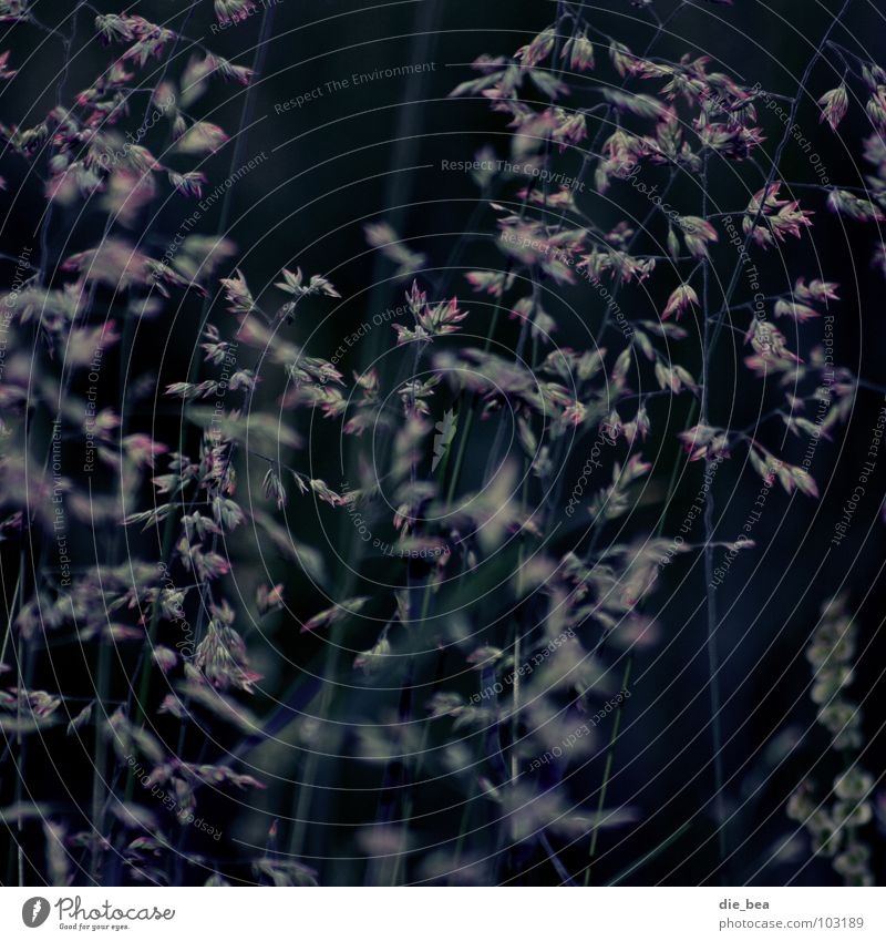 Gras Pflanze dunkel Wiese