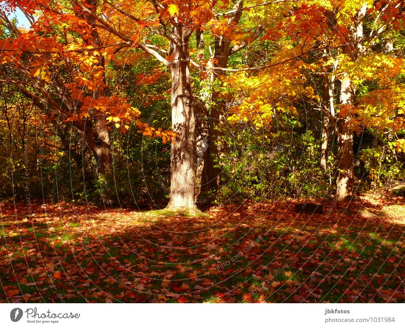Herbst Natur Pflanze Sonne Baum rot Landschaft Freude Wald Umwelt Leben Gefühle Glück Garten Park Freizeit & Hobby