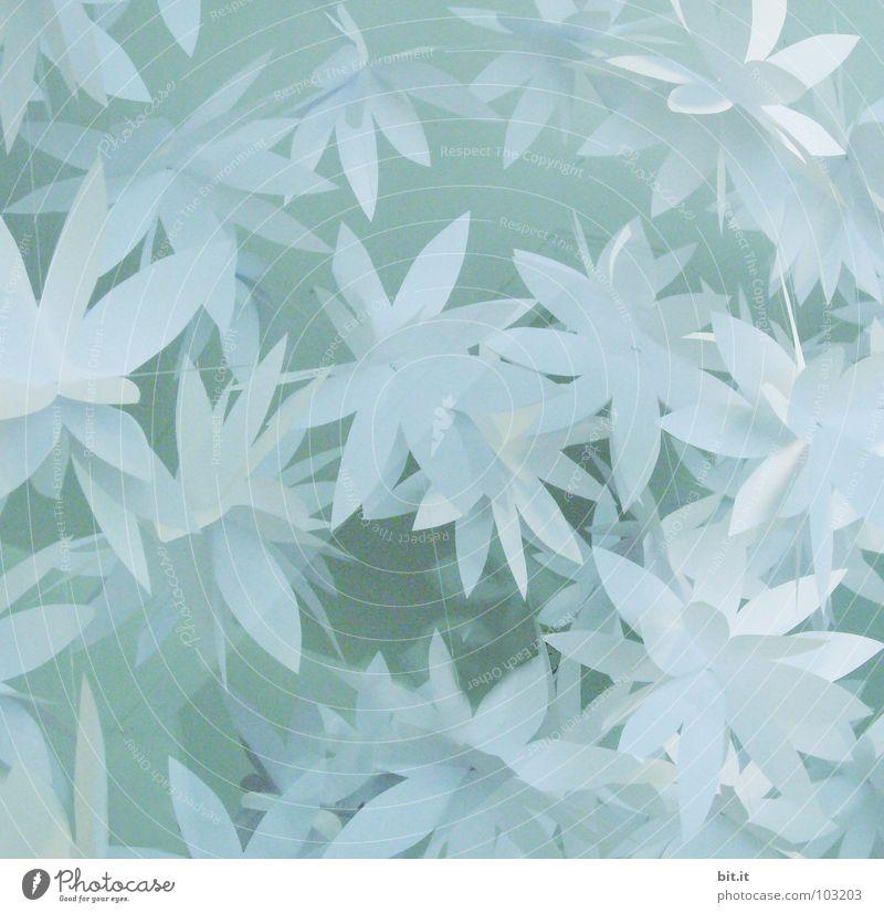 FLOWERPOWER II blau Weihnachten & Advent schön weiß Blume ruhig Winter Erholung kalt Schnee Blüte Feste & Feiern hell Kunst Eis Geburtstag