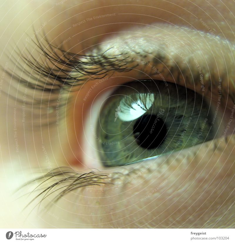 Zarte Neugier Gesicht Auge weich zart Wimpern Pupille Regenbogenhaut Organ