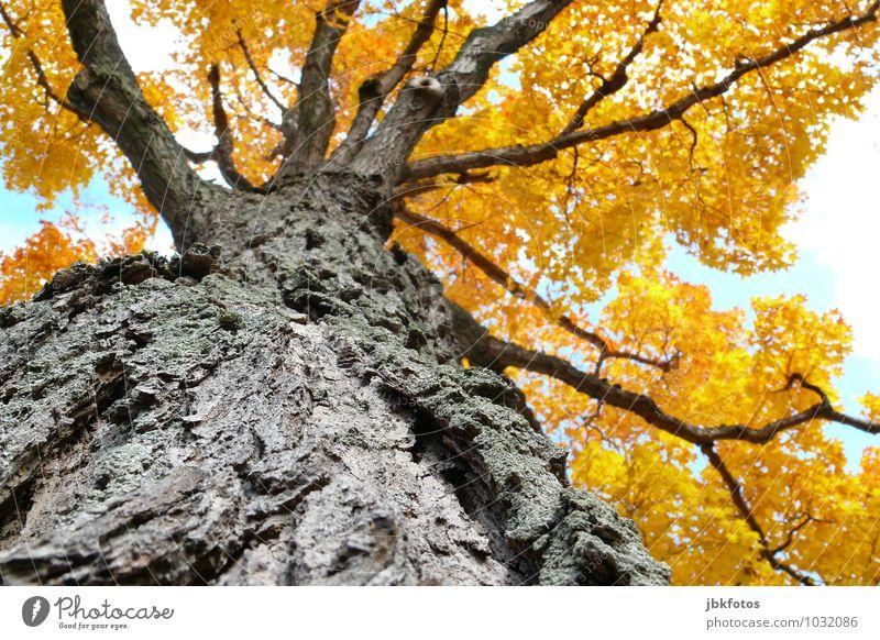 Lebensbaum Himmel Pflanze schön Sonne Baum Landschaft Wald natürlich Glück Garten Park Wachstum Zufriedenheit Schönes Wetter Wohlgefühl Umweltschutz
