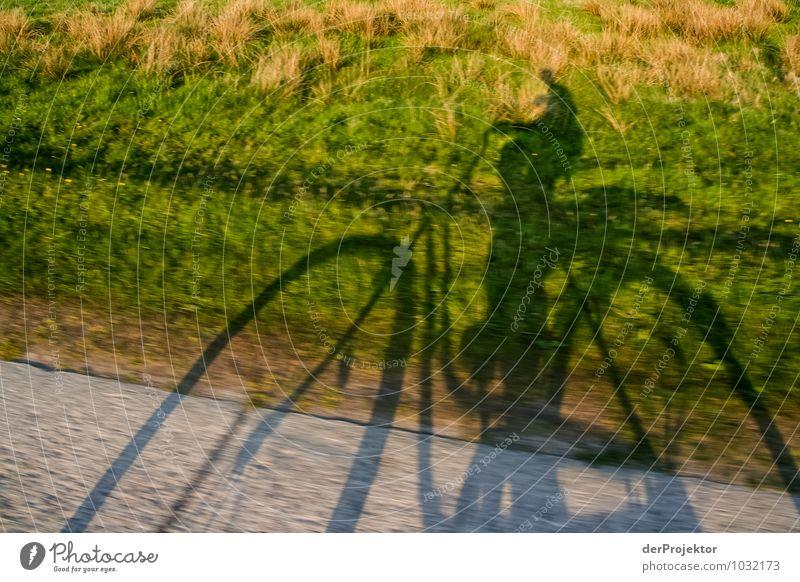 Mein Schatten fährt schneller Mensch Natur Ferien & Urlaub & Reisen Jugendliche Pflanze Landschaft Freude 18-30 Jahre Umwelt Erwachsene Gefühle Wiese Gras