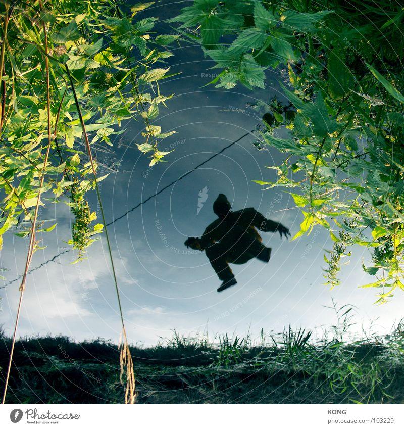 up = down springen Spiegel Reflexion & Spiegelung Oberfläche Tier Sommer grau-gelb Anzug gedreht verkehrt Freude Luftverkehr fly hoch mirror refection
