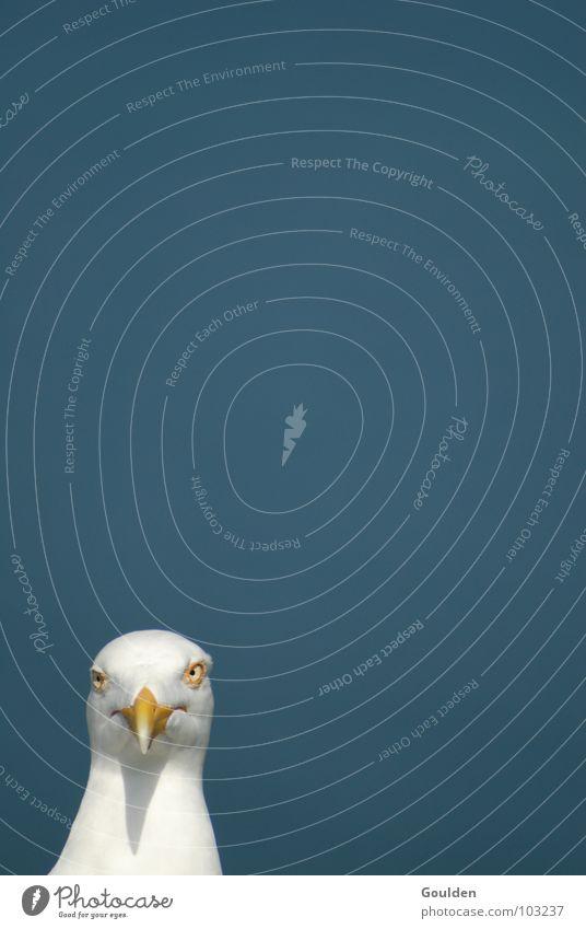 Himmelbau Möweweiß Natur Himmel weiß Meer blau Strand Ferien & Urlaub & Reisen Auge Tier Erholung Luft Vogel warten lustig Ziel beobachten
