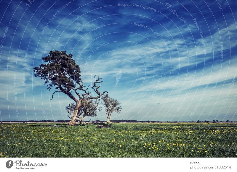 Halbtot Himmel blau grün Baum Landschaft ruhig Wolken Ferne Wiese braun Horizont Schönes Wetter Unendlichkeit