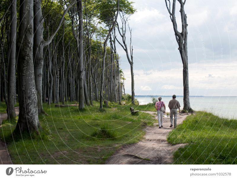 To my parents Mensch Ferien & Urlaub & Reisen alt grün Sommer Meer Wald Senior Wege & Pfade gehen Paar Zusammensein Tourismus 60 und älter Ausflug Spaziergang