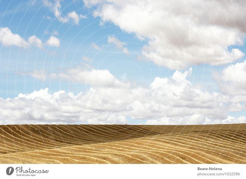 Schwungvoll abgeerntet Natur blau Sommer weiß Landschaft Wolken Ferne braun Linie Arbeit & Erwerbstätigkeit Feld Luft Wachstum Erfolg ästhetisch Vergänglichkeit