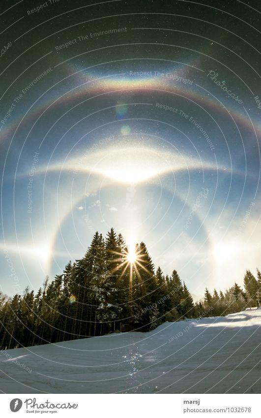 22°-Ring mit Zirkumzenitalbogen Ferien & Urlaub & Reisen Erholung ruhig Winter Wald Schnee Freiheit Eis Wetter leuchten Schönes Wetter Frost harmonisch
