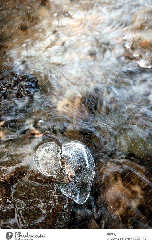 Da schmilzt mein Herz dahin Leben harmonisch Erholung ruhig Valentinstag Wasser Winter Eis Frost Bach authentisch einfach Flüssigkeit nass natürlich herzförmig