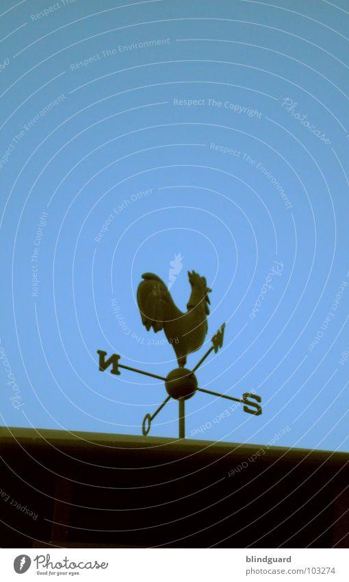 Windiger Hahn Wetterhahn Windrichtung drehen Dach Süden Osten Himmelsrichtung Sturm Blech Eisen sehr wenige dunkel schwarz minimalistisch graphisch flach Kunst