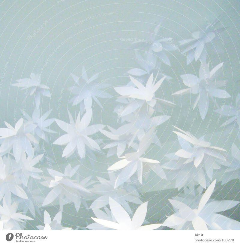 FLOWERPOWER III blau Weihnachten & Advent weiß Blume Winter kalt Frühling Blüte Muster Glück Feste & Feiern Kunst hell Eis Dekoration & Verzierung Geburtstag