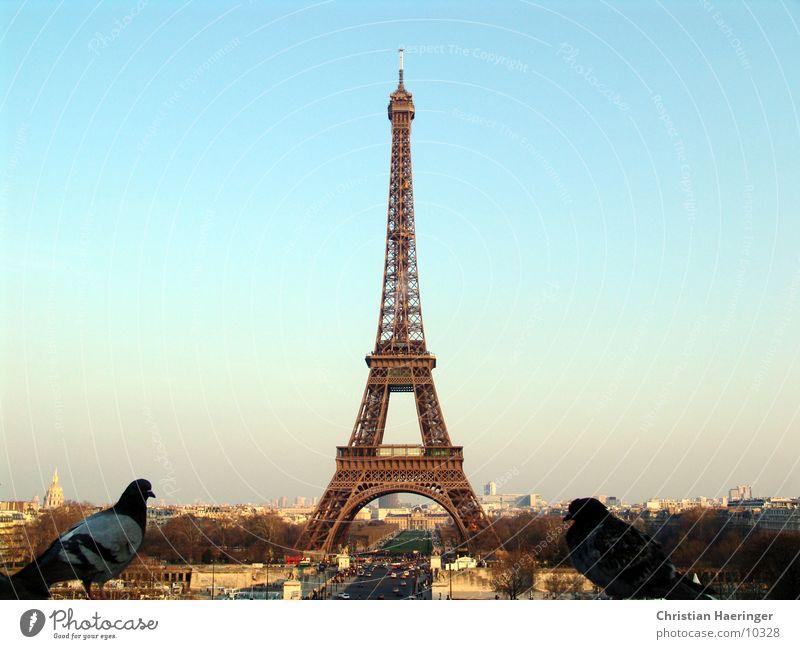 zwei tauben Paris Frankreich Tour d'Eiffel Vogel Taube Stadt Haus Skyline Horizont Europa