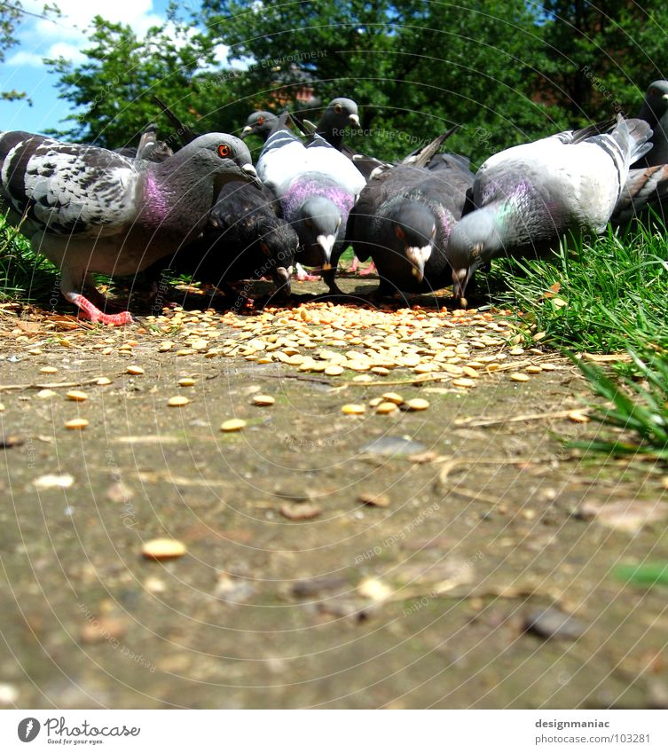 Was Ausfressen! blau grün weiß Tier Wege & Pfade Gras grau braun Vogel Park Ernährung Feder Verkehrswege Korn 5 Fressen