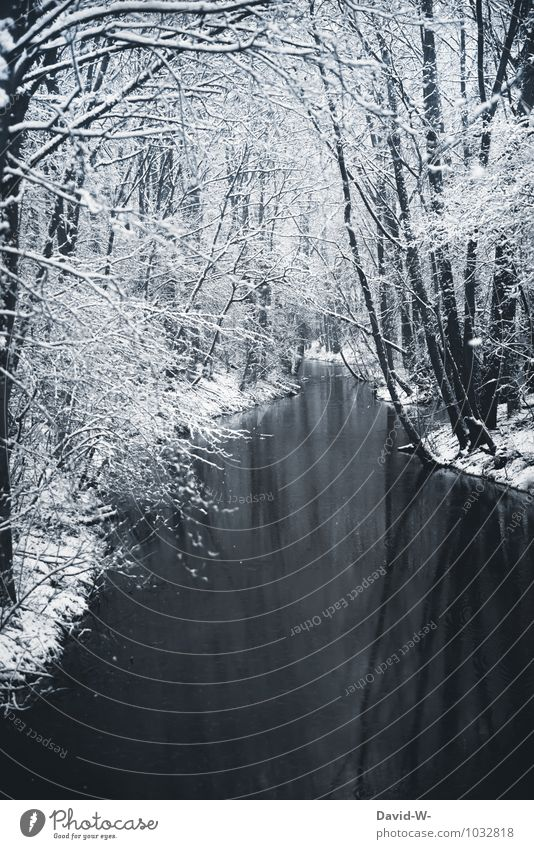 Idylische Winterlandschaft Natur Ferien & Urlaub & Reisen schön Landschaft ruhig Wald kalt Umwelt Schnee Stimmung Eis Idylle elegant Schönes Wetter Frost