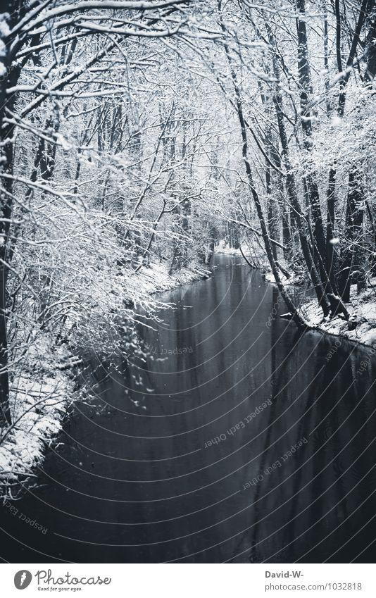 Idylische Winterlandschaft Natur Ferien & Urlaub & Reisen schön Landschaft ruhig Winter Wald kalt Umwelt Schnee Stimmung Eis Idylle elegant Schönes Wetter Frost