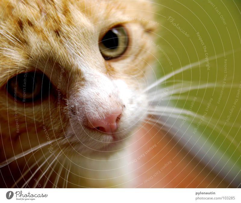 Grün hinter den Ohren (auch wenn keine drauf sind) 2 grün Katze Sessel Tier Fell Pflanze weiß Säugetier Garten D80 Nikon orange Statue kleine Katze