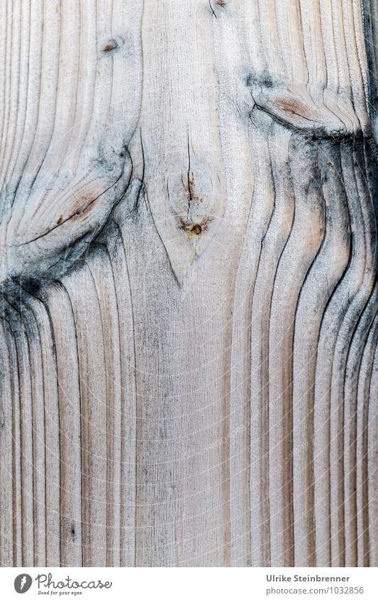 Holzart 1 Nutzpflanze Haus Mauer Wand Fassade atmen einzigartig nachhaltig natürlich Schutz ästhetisch Design Energie Natur Maserung Holzstruktur Linie Astloch