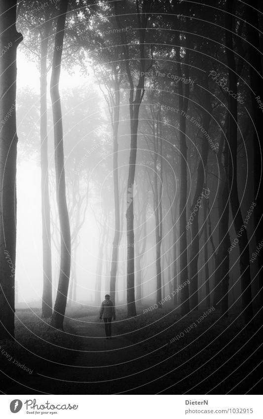 Still Strand Meer Landschaft Pflanze Erde Sand Baum Gras Wald Küste Ostsee grau schwarz weiß Gespensterwald Wege & Pfade Nebel Mensch klein gewaltig ruhig