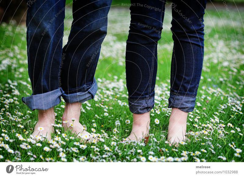 Wohlfühloase Mensch Natur Jugendliche blau grün weiß Sommer Junge Frau Erholung Blume Junger Mann 18-30 Jahre Erwachsene Wiese Blüte Gesundheit