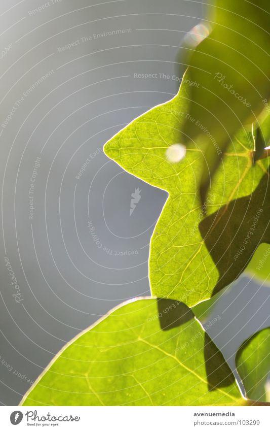 Reiner Naturkontrast grün Sommer Blatt Schönes Wetter Zoomeffekt