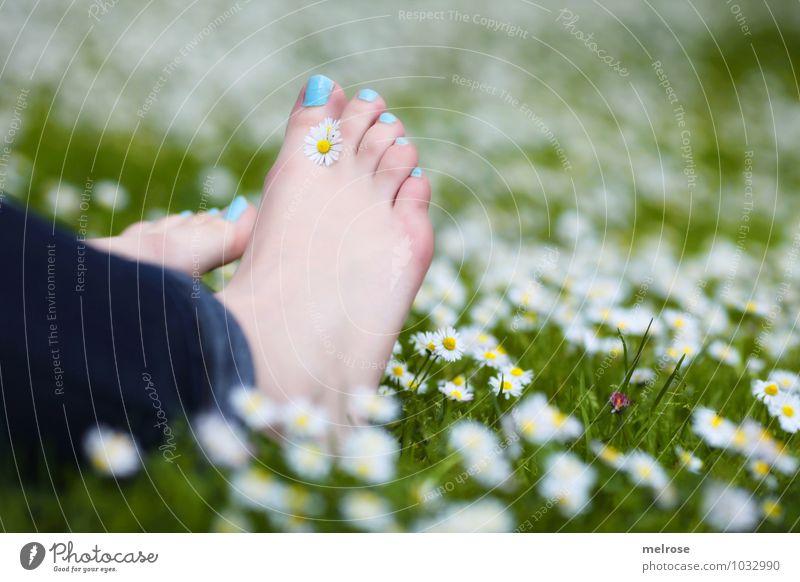 Entspannung pur Mensch Natur Jugendliche blau Pflanze schön grün weiß Sommer Junge Frau Erholung Blume 18-30 Jahre Erwachsene Wiese Gesundheit