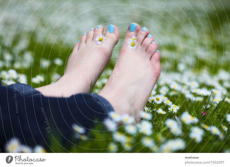 Entspannung pur II Lifestyle feminin Junge Frau Jugendliche Erwachsene Beine Fuß Zehen Zehennägel Barfuß 18-30 Jahre Natur Sommer Gänseblümchenwiese Wiese Jeans