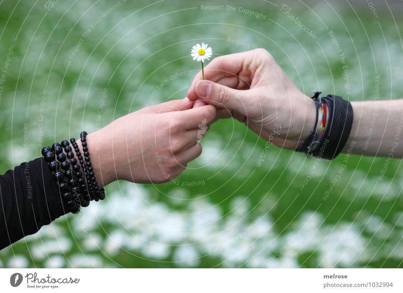 I love you Mensch Natur Jugendliche Pflanze grün weiß Junge Frau Hand Blume Blatt Junger Mann 18-30 Jahre schwarz gelb Erwachsene Gefühle