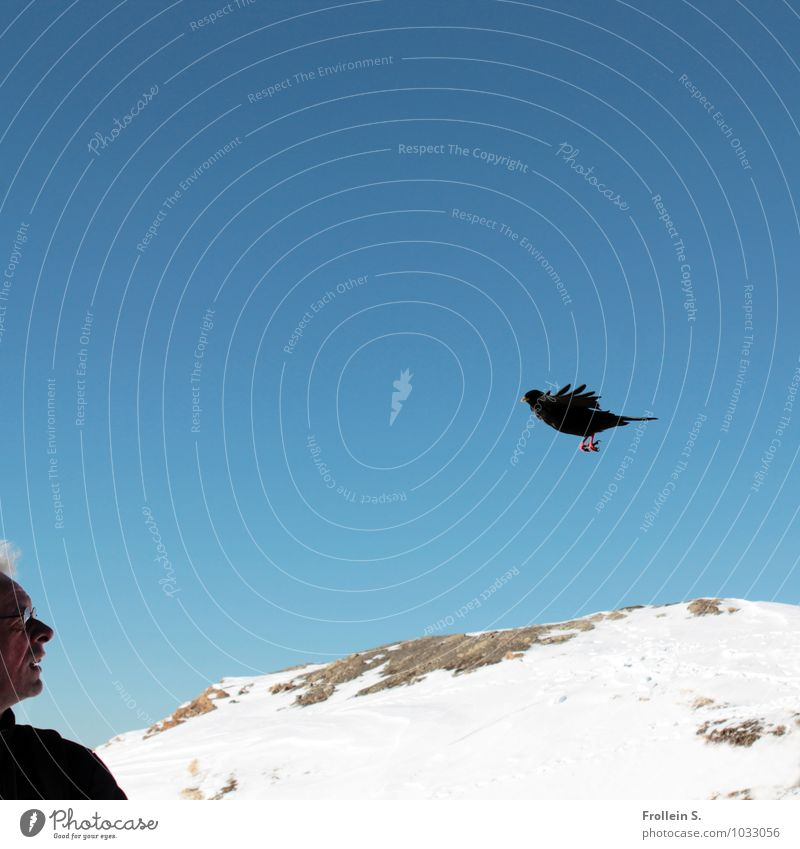 Vogelperspektive Mann Erwachsene Kopf Gesicht 1 Mensch 45-60 Jahre Natur Landschaft Himmel Wolkenloser Himmel Winter Alpen Berge u. Gebirge