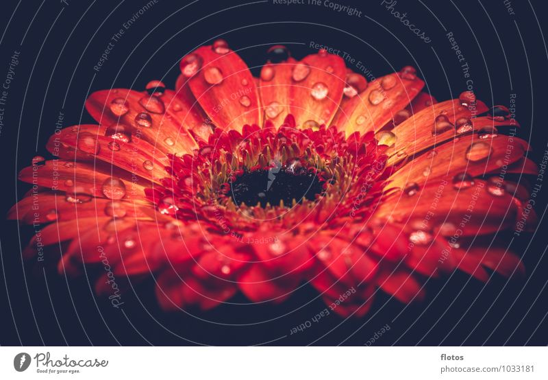 Ein Tropfen kommt selten allein ! Natur Pflanze Wassertropfen Frühling Sommer Wetter Regen Blume Blüte Grünpflanze Garten Blühend Duft außergewöhnlich frisch