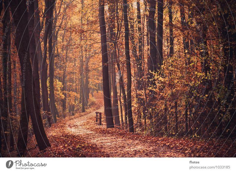 Der Weg Natur schön Baum rot Landschaft schwarz Wald Herbst natürlich braun orange Warmherzigkeit fallen verblüht