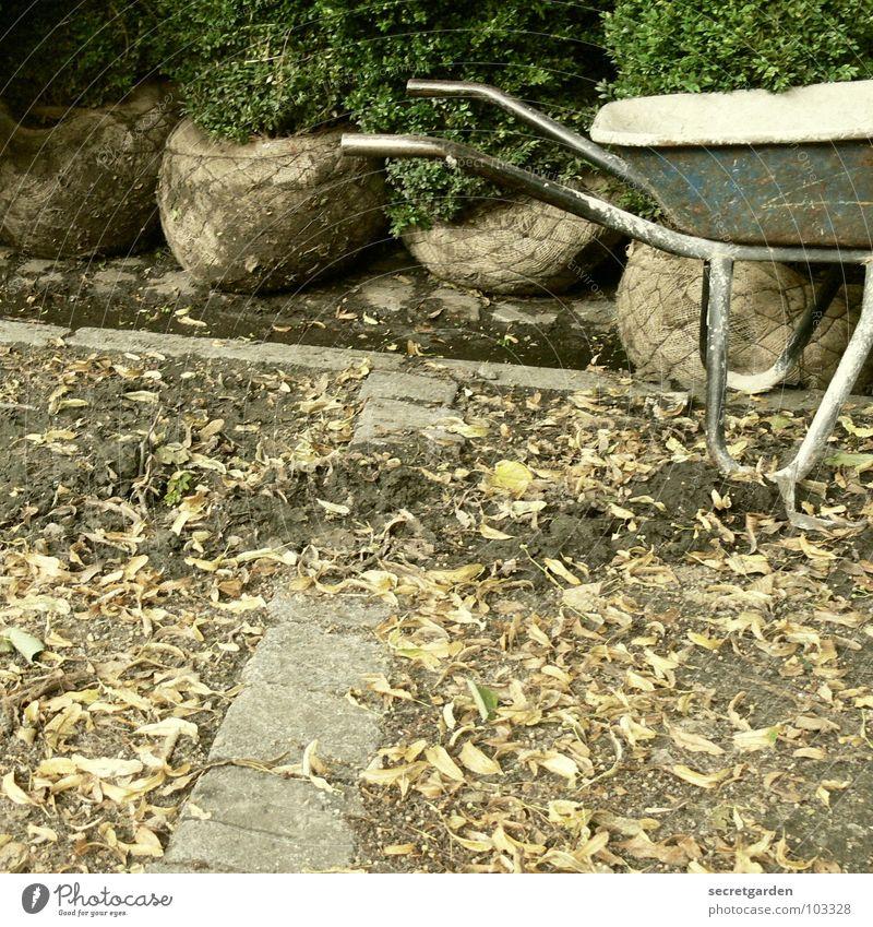 blaue schubkarre blau grün Baum Pflanze Blatt Erholung Herbst Garten Park Erde Arbeit & Erwerbstätigkeit Freizeit & Hobby dreckig Beginn Sträucher Kultur