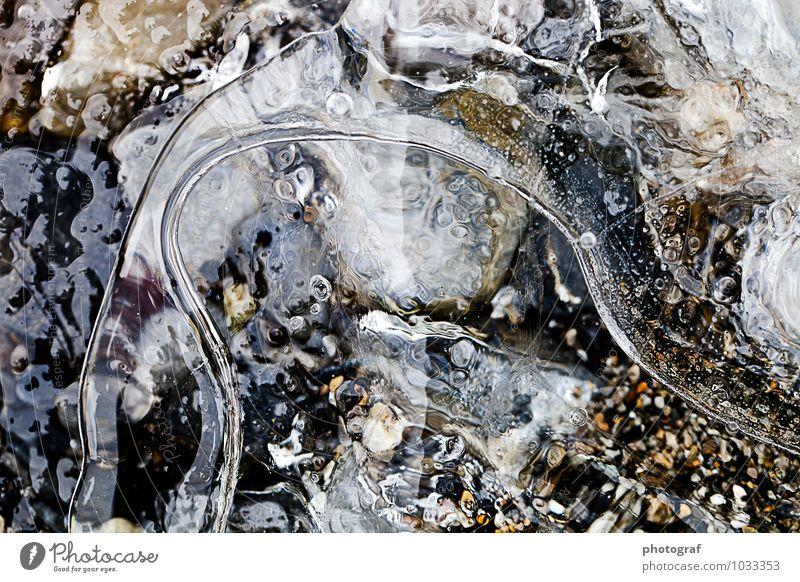 Eis Leben Luft Wasser Winter Frost Wachstum frisch kalt natürlich Natur gefroren Eiskristall Eistropfen eisblase Farbfoto Außenaufnahme Nahaufnahme