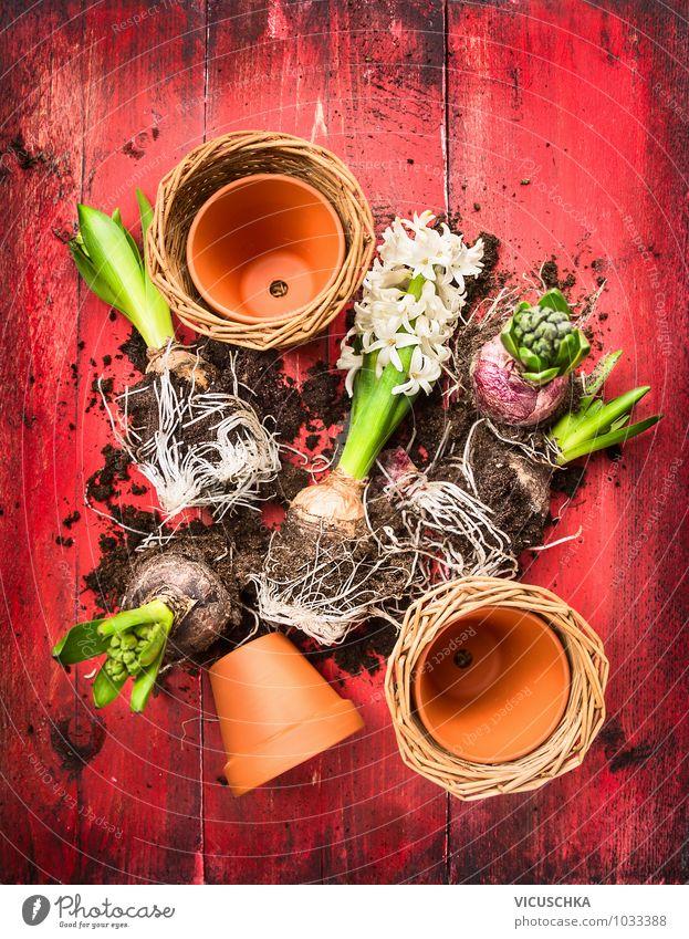 Hyazinthe mit Blumenerde und Blumentöpfe Natur Pflanze Sommer rot Frühling Stil Garten Freizeit & Hobby Design Erde Symbole & Metaphern Blumentopf Holztisch
