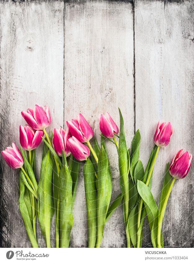 Pink Tulpen auf weißer Holzwand Natur Pflanze Sommer Blume Wand Leben Frühling Stil Feste & Feiern Garten rosa Design Dekoration & Verzierung Geburtstag