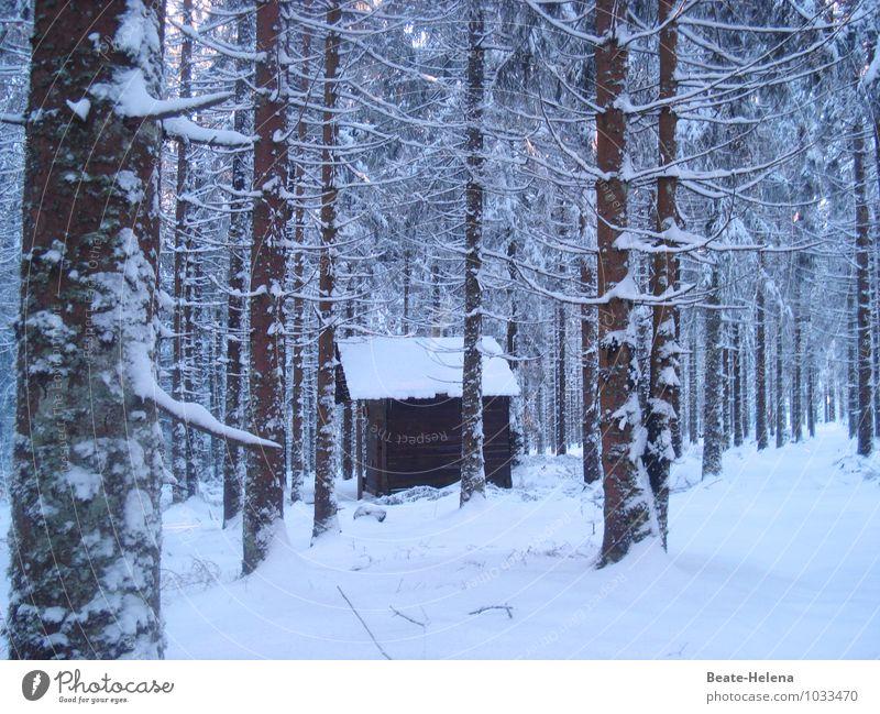 Hüttenzauber Winter Schnee Winterurlaub Häusliches Leben Haus Traumhaus Umwelt Natur Landschaft Eis Frost Baum Urwald Schwarzwaldhaus Gebäude stehen