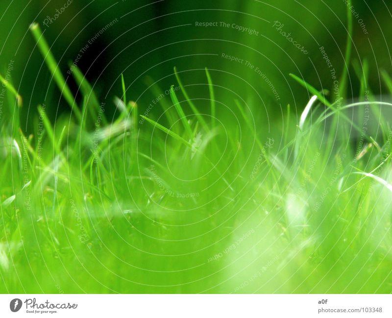 ...wachsen grün Wachstum Makroaufnahme grass Natur heile welt vista windows