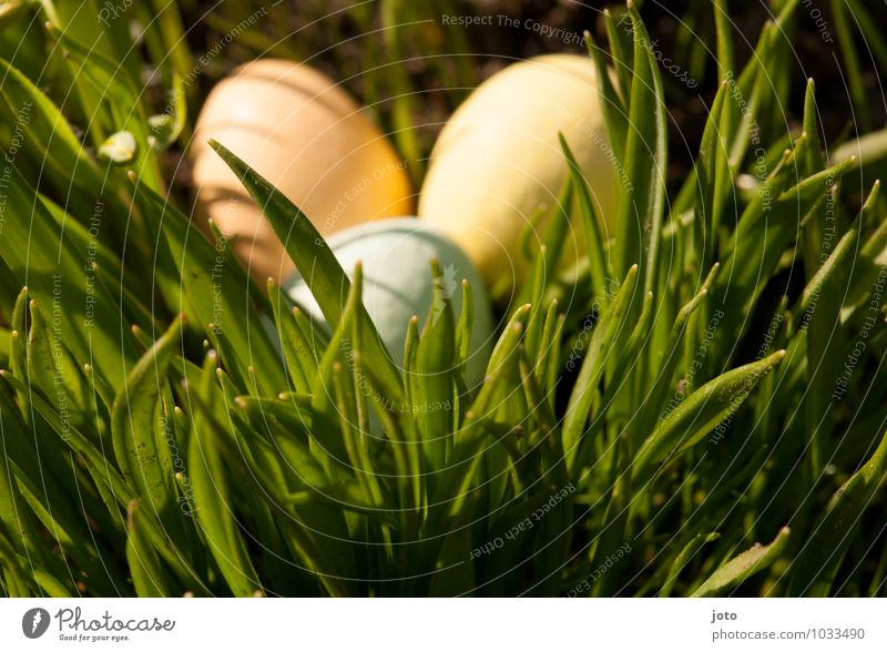 gefunden! Natur gelb Wärme Wiese Gras Frühling Feste & Feiern Garten Park orange Ausflug weich Geschenk Schönes Wetter Kindheitserinnerung Neugier