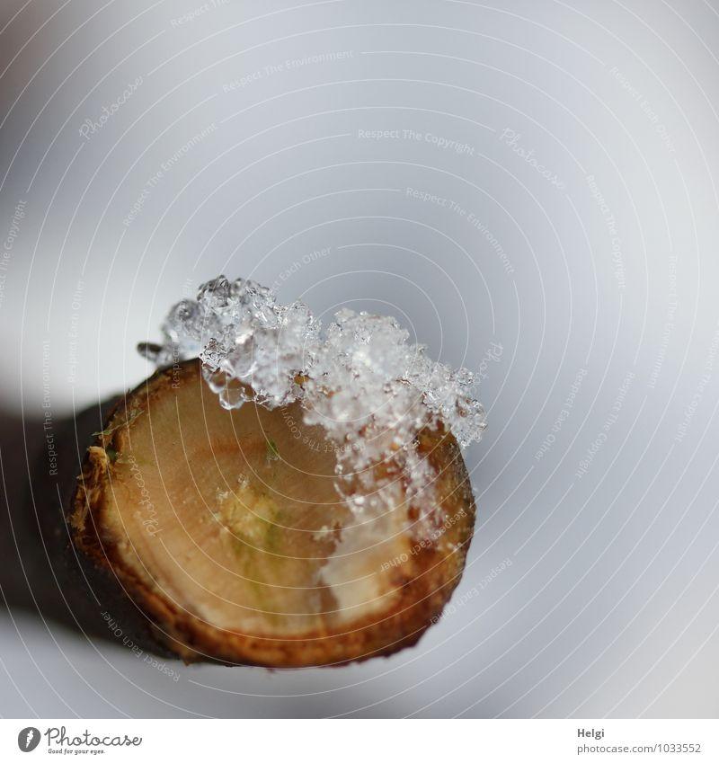 kalt | ... Umwelt Natur Winter Eis Frost Schnee Ast Wald frieren liegen einfach klein natürlich braun grau weiß einzigartig Vergänglichkeit Wandel & Veränderung