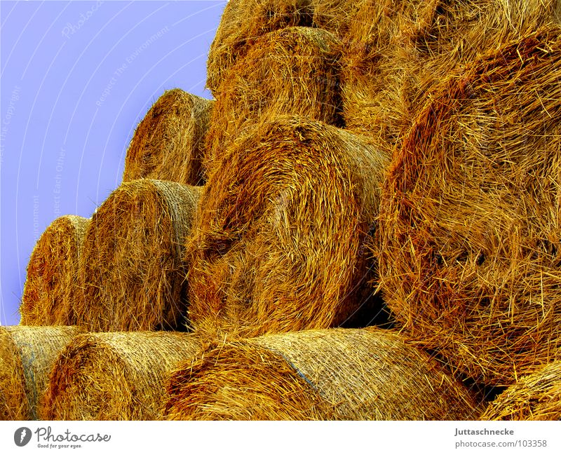 Der Arbeit Lohn Sommer Herbst Feld Landwirtschaft Stapel Heu Stroh Strohballen Heuballen rasenmähen Feldarbeit einbringen