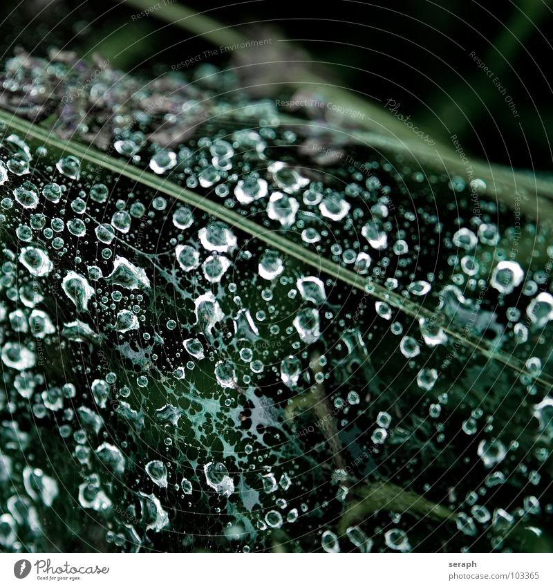 Morgentau Wassertropfen Spinnennetz Reflexion & Spiegelung Gras Halm Perlenkette Flüssigkeit liquide Regenwasser dunkel Tau nass Strukturen & Formen Tropfen