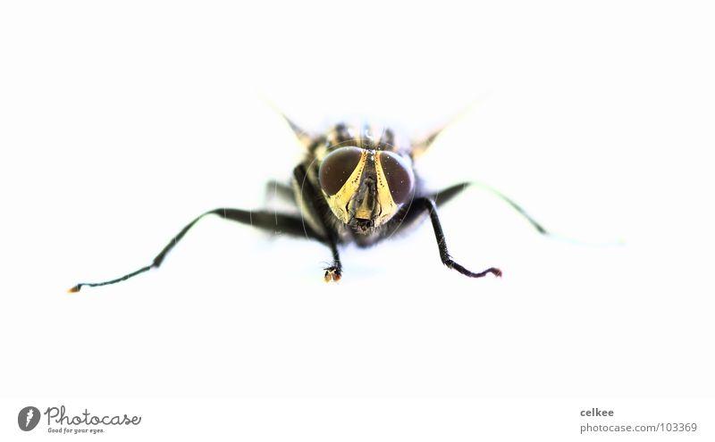 wie aus dem nichts... Facettenauge weiß Fliege Tod Makroaufnahme hell Fuß Beine