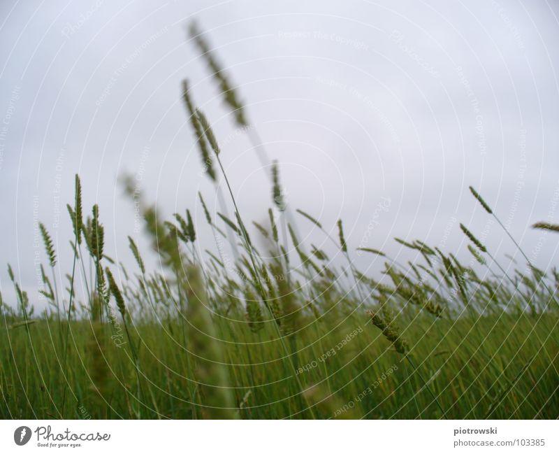 Nordsee Meer grau Wolken Gras Himmel Stranddüne Wind