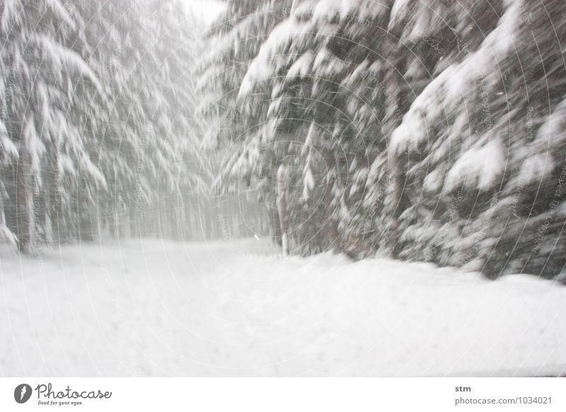 schneekettenpflicht Natur Pflanze Baum Landschaft Winter Wald Umwelt Straße Schnee Schneefall Eis Freizeit & Hobby Wetter Angst PKW Wind