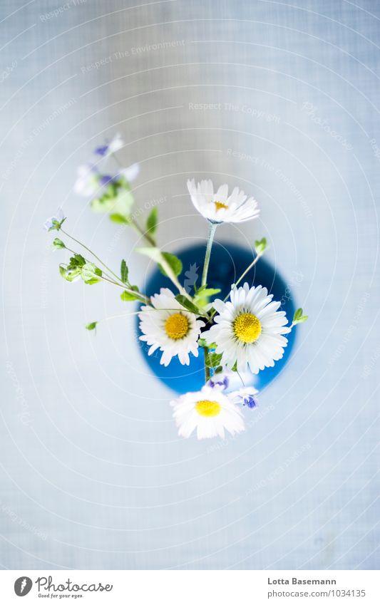 Sommerstrauß Natur Pflanze Blume Gras Blatt Blüte Grünpflanze Wildpflanze Gänseblümchen Wiese Blumenstrauß Vase Blumenvase ästhetisch Duft Fröhlichkeit frisch