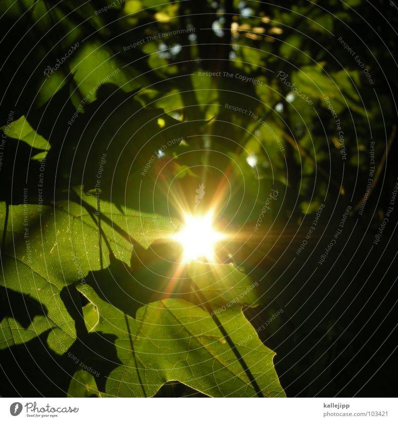 sherewoodforest Natur Baum Sonne grün Sommer Blatt Wald Leben Erholung Garten Wärme Erde Sträucher Netz Ast Vergänglichkeit
